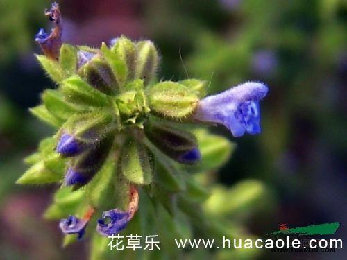 植物中有哪些好听又富含诗意的名字呢?
