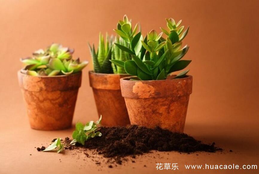 如何判断花草,什么时期该施什么肥 (氮磷钾肥对盆栽花卉起什么作用)