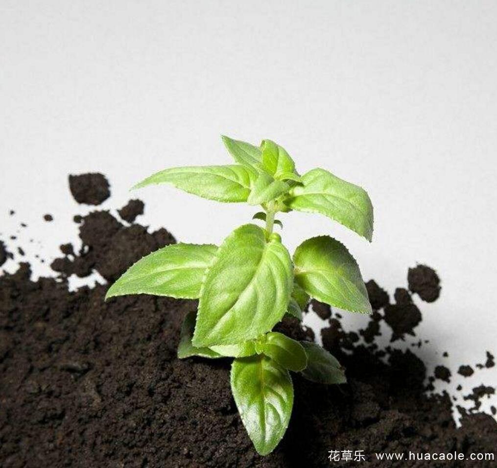 家庭养花常用的8类土壤及配制方法