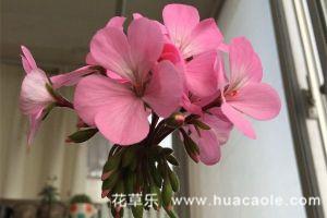 六月份花卉常见虫害及其防治