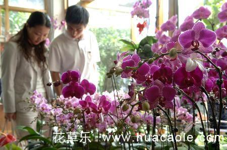 购买和养护节日盆栽花卉