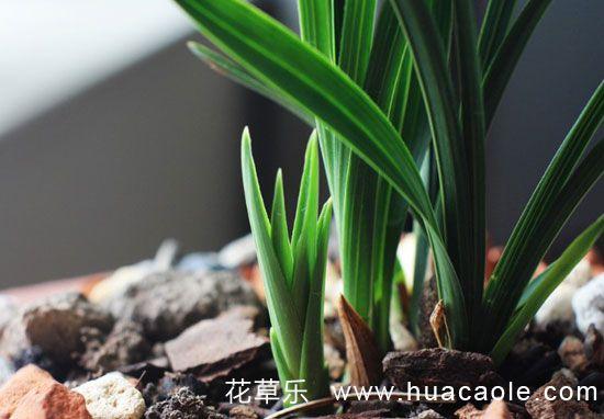 兰花怎么养?养好兰花的五大要素和三关键