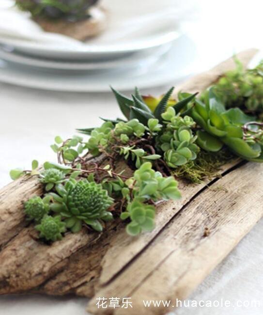 自制可爱多肉浮木盆栽