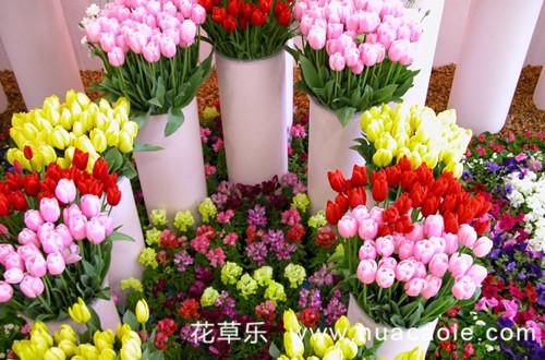 怎么给鲜花保鲜 鲜花怎么保鲜时间长(图)