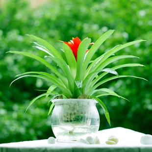 水培室内花卉