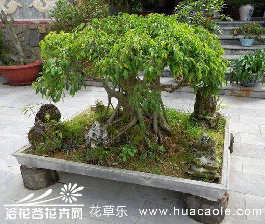 盆景花卉施肥要以有机肥为主