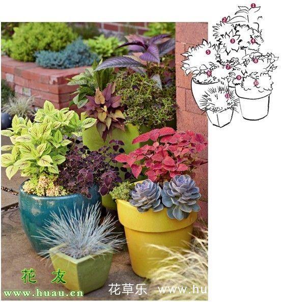 如何打造组合观叶植物盆栽