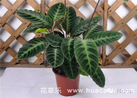 室内观叶植物的全年养护大全