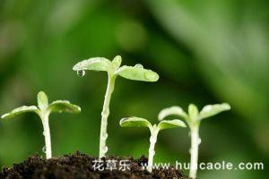 家庭养花如何自制花肥