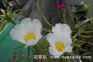 六月份花卉常见病害及其防治