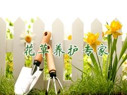 紫藤盆景培育方法